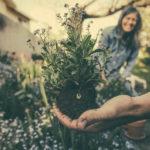 Jak przygotować niewielki ogródek na nadejście wiosny?