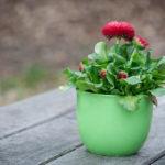 Jak zabezpieczyć rośliny na czas przeprowadzki